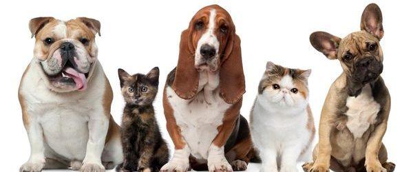 Linio y Purina y se unen para consentir a las mascotas